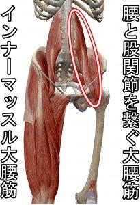 インナーマッスル大腰筋は腰と股関節を繋ぐ