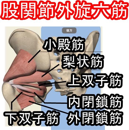 股関節外旋六筋