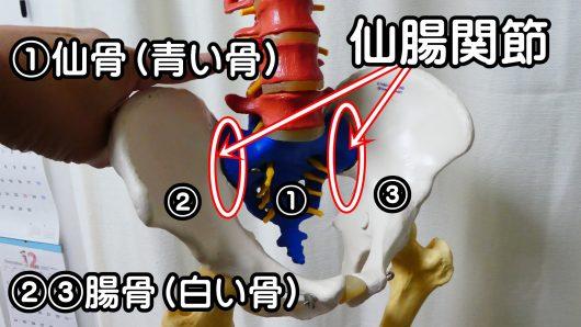 骨盤の骨と関節仙腸関節仙骨腸骨