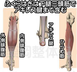 ふくらはぎは下腿三頭筋でアキレス腱まで含む
