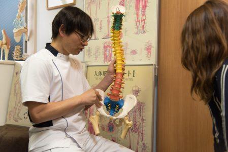 脊柱模型背骨模型