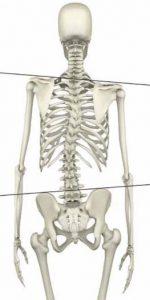 背骨骨盤肩甲骨のゆがみ