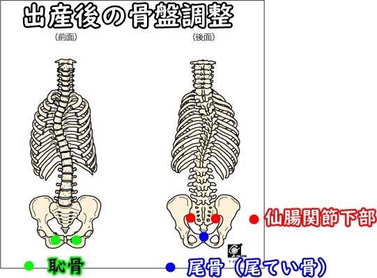 出産後の骨盤調整箇所
