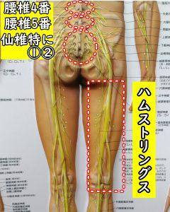 足の痺れのポイント