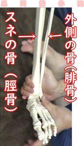 脛骨と腓骨下腿骨