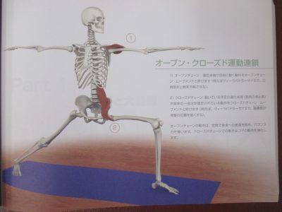運動連鎖体操ヨガ