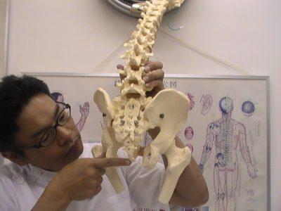 尾てい骨尾骨股関節