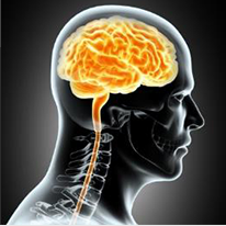 頭蓋骨全般脳