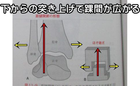 足関節足首は下からの突き上げで踝間がひろがる
