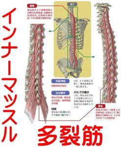 インナーマッスル多裂筋